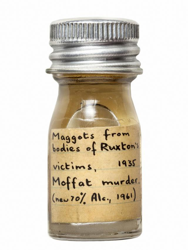 Maggots from the bodies of Ruxton's victims, Moffat murders: The Trustees of the Natural History Museum.